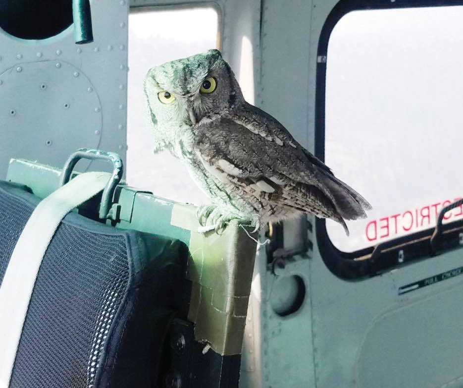 Sky Aviation pilot Dan Alpiner took this photo of an owl that flew into his aircraft while making water drops on the Creek Fire — what he called an unexplainable and magical miracle. Submitted photo